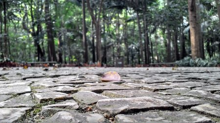 sidewalk with rough stones at the park