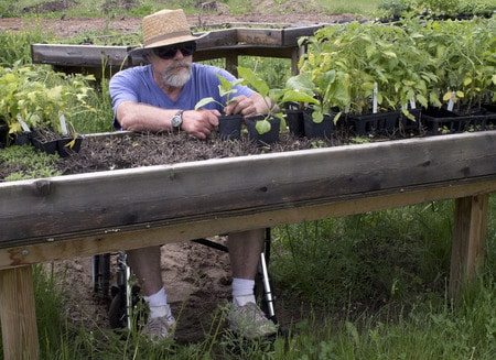 senior man in a wheelchair tending to plants in a raised garden