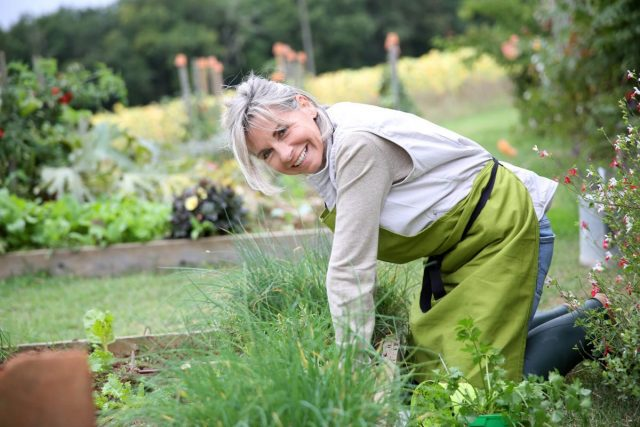 senior woman working in her garden as a hobby