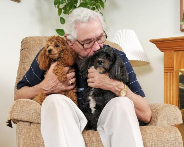 man sitting in lift chair with dogs