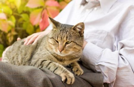 senior lady with cat on her lap
