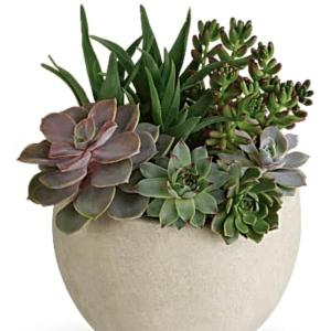 Desert Beauty Succulent Garden Plant - Teleflora