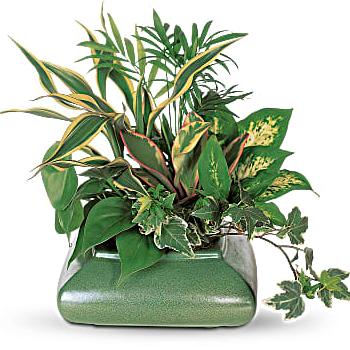 Small Garden Dish Flower Arrangement - Teleflora