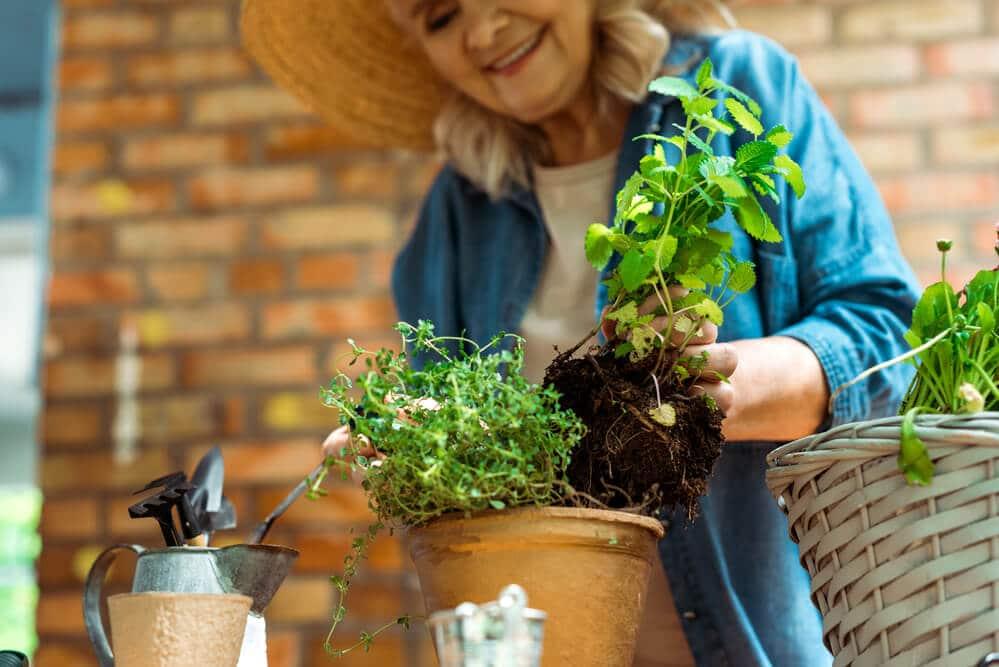 safe-gardening-for-seniors