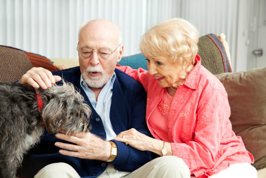 animal therapy for elderly