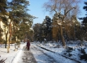 Best Boots For The Elderly: Safer Walking in Snow and Ice