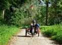 Three Wheel Bikes for Seniors for Fun, Recreation, or Even Practical Mobility!
